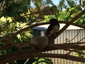 Willy Wagtails Home Renovation